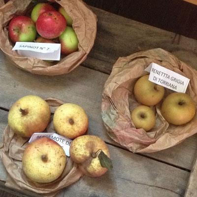 Orpierre, marché aux fruits anciens, exposition, variétés pommes et poires anciennes