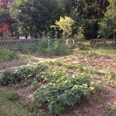 Potager, Gap, Hautes Alpes, kitchen garden, plants, haricots, tomates,