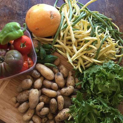 Potager, récolte, légumes, slow life, Gap, Hautes Alpes