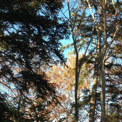 Domaine de Charance, parc, arbres, Gap, Hautes Alpes