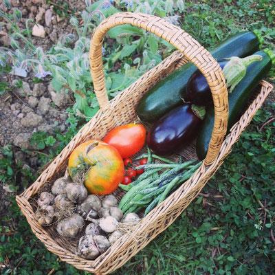 récolte ail tomates courgettes aubergines