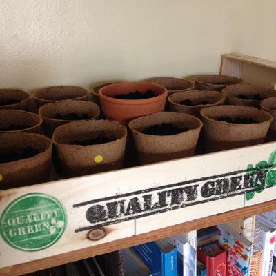 Semis, Aubergine, Panais, Potager, slowlife, kitchen garden
