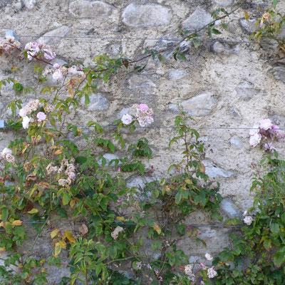 Domaine de Charance, jardin remarquable, roses, château, Gap, Hautes Alpes