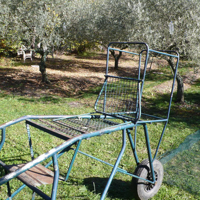 oliviers, récolte, outil, Aiglun, Haute Provence