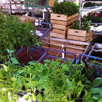 plants, tomates, marché, Gap