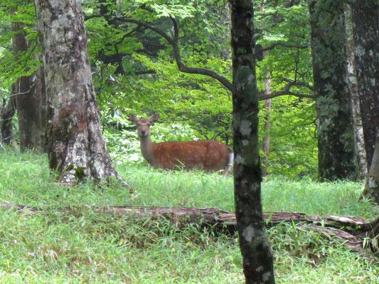 神の使い…鹿に会いました♡