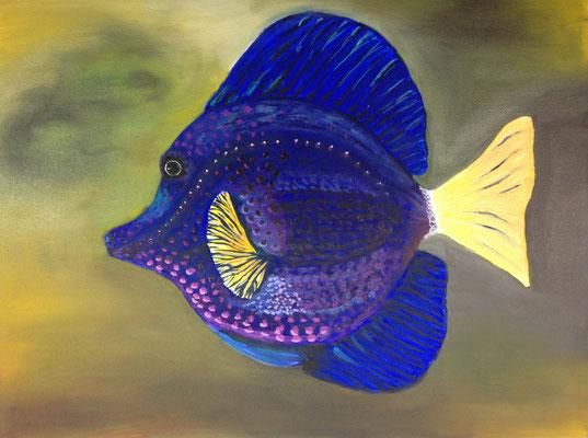 Doktorfisch, B 40 x H 30 cm, Öl auf Leinwand, 350,-- EUR