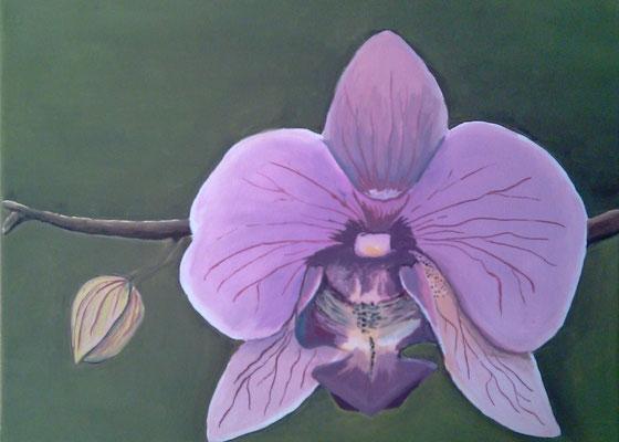 Orchidee, verkauft