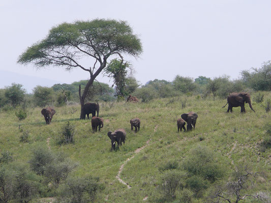 Safari im Tarangire Nationalpark