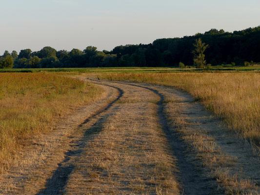 Lebuser Oderwiesen