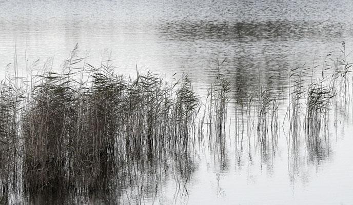 Foto: Wiebke Lamée
