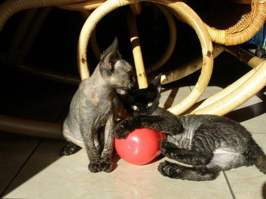 Aurora ed Amy sono le gattine di Giulia e Samuele, di Torino