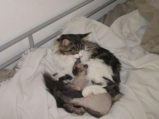 Speedy vive con Marina e la maine coon Sissy, che adora