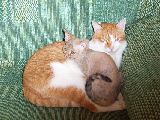 Maya vive a Pinerolo con il suo inseparabile amico Romeo, un  gattone bianco e rosso dal cuore bianconero!