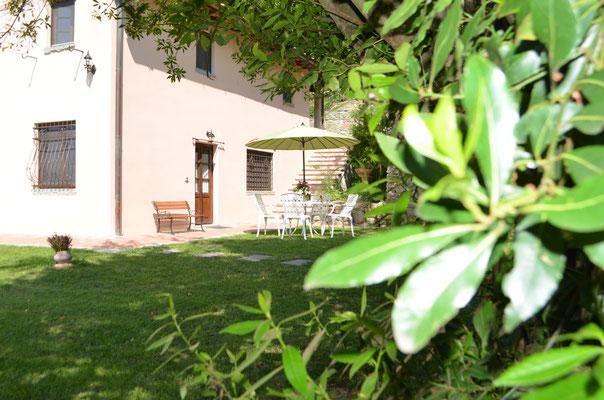 Il giardino - Primo piano della bellissima pianta di Alloro