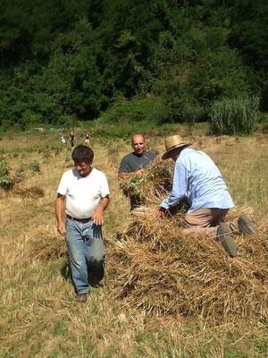 La battitura del grano