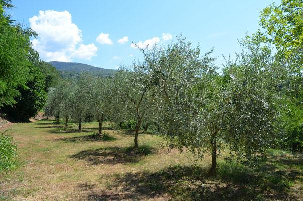 L'oliveta