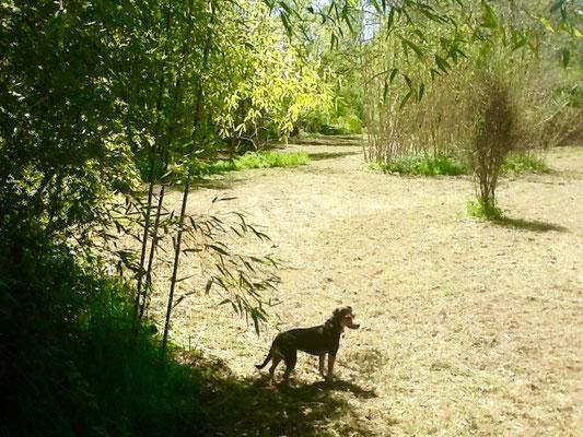 Il parco lungo il torrente Ciuffenna con Nana