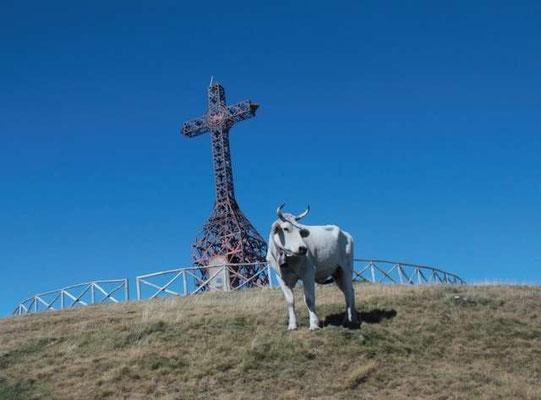 Mucche al pascolo ai piedi della Croce del Pratomagno