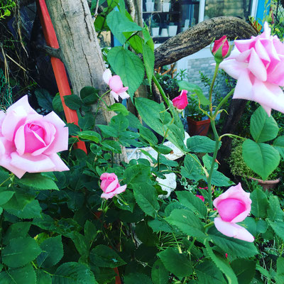 フランス 広島 廿日市 ガーデニング 庭