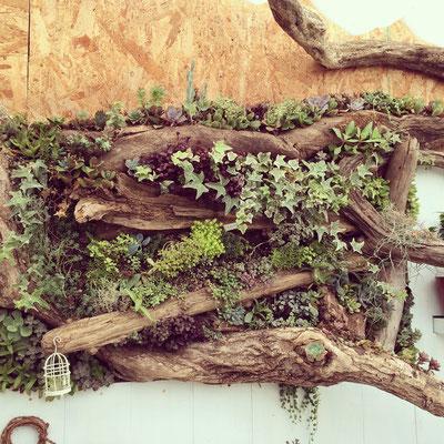 壁面緑化 垂直庭園 広島