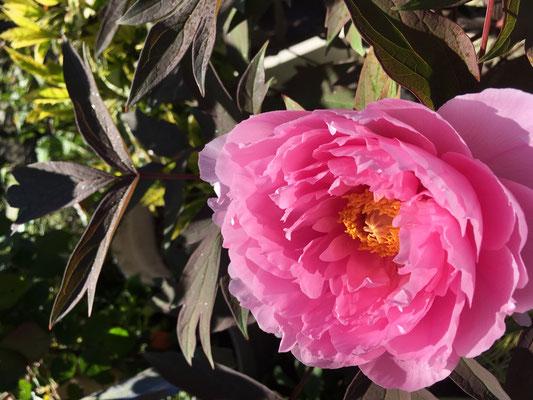 庭育 こども 子育て 新築戸建 外構 こどものための庭づくり 花 廿日市 庭づくり ガーデニング
