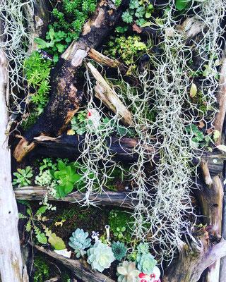 壁面緑化 広島