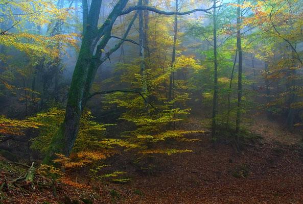 Rotkäppchens Märchenwald