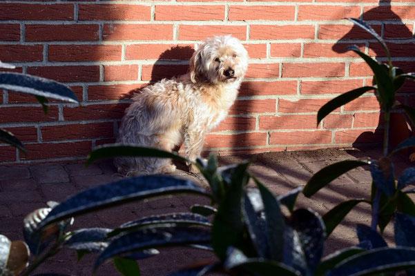 Lester in den ersten Sonnenstrahlen am Tag