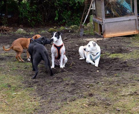 """Die """"Erwachsenen"""" helfen mir dabei den neuen Boden platt zu legen"""