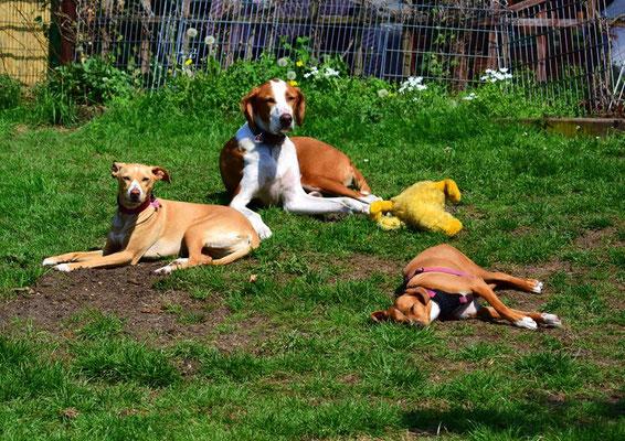Die Hundekinder sind müde. Das Entchen auch.