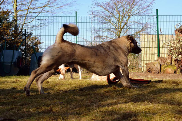 Hunde-Yoga