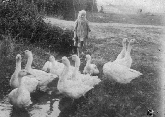 """""""Gänseliesel"""" (1912 ) ca. 8-Jähriges Mädchen, Schweinebrink  Salzhausen; Schule war im Winter, im Sommer mussten die Kinder Vieh hüten, daher wohl auch die Klage eines geplagten Jungen über das Leben der Kinder: """"In'n Sommer möd wi arbeidn un in'n Winne m"""