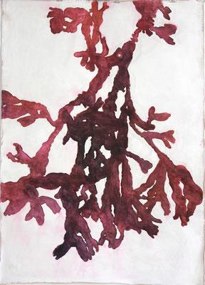 Roodwier  aquarel op geprepareerd textiel met finish van bijenwas  105 x 75 cm