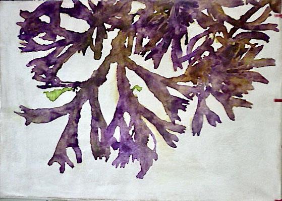 Wiergroei  aquarel op geprepareerd textiel met finish van bijenwas  105 x 75 cm