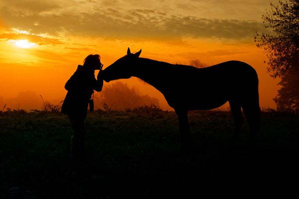 Chut ! La femme qui parle à l'oreille des chevaux