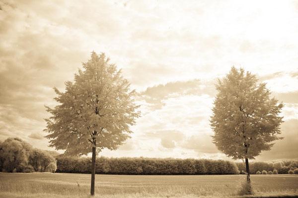 Kirsten: Zwei Bäume
