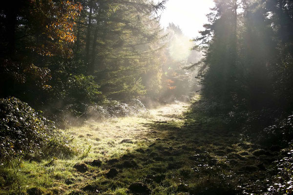 Peter: Wahner Heide