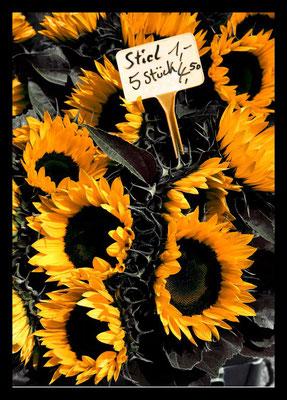 Peter: Sonnenblume