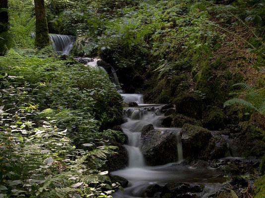 Peter: Canonteign Falls