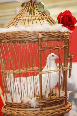 Ausstellungstaube auf Hochzeitsmesse, Fotograf: Tom Wenig