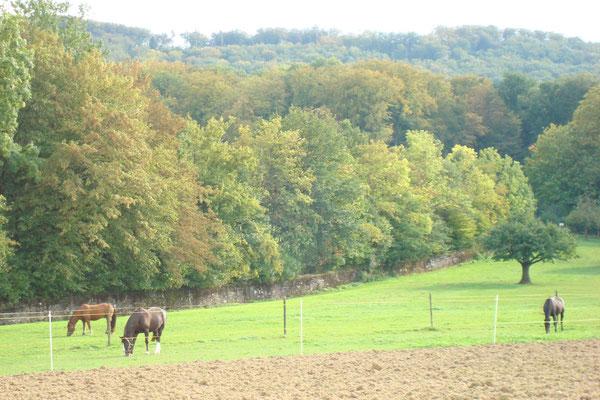 Grosse Pferdeweiden