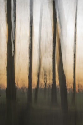 Mysterious Trees 4