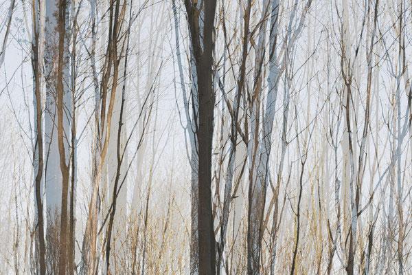 Zie door de bomen het bos niet meer 1
