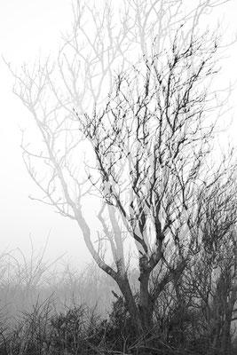 Bomenserie Texel 2