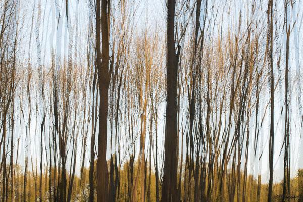 Zie door de bomen het bos niet meer 2