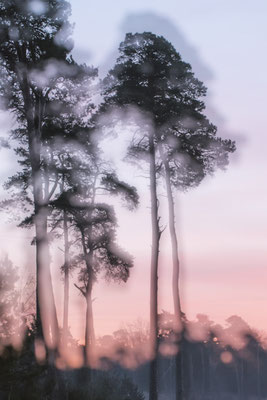 Mysterious Trees 9