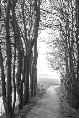 Bomenserie Texel 3