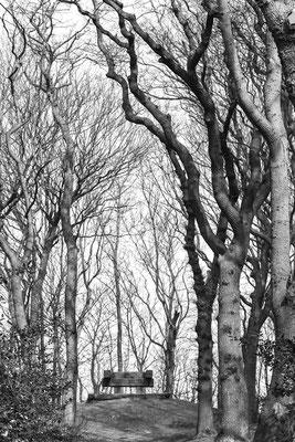 Bomenserie Texel 4