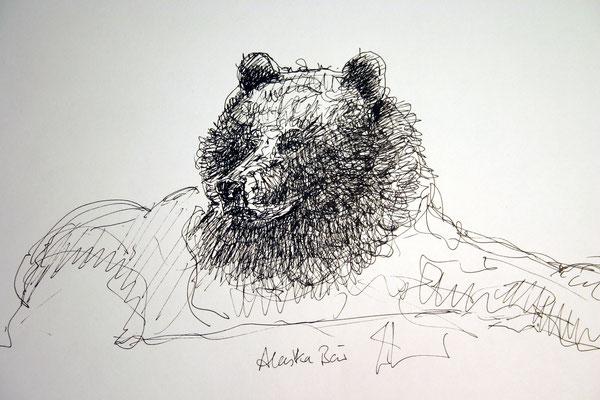 Der Bär vom Yukon River
